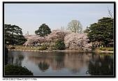080405 新宿御苑 櫻花樹下野餐:DSC_1998.jpg
