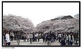 080327 上野恩賜公園 櫻花直擊:CIMG6033.jpg