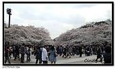 080327 上野恩賜公園 櫻花直擊:CIMG6036.jpg