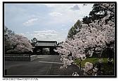 080329 東京櫻花盛開了:DSC_1585.jpg