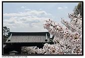 080329 東京櫻花盛開了:DSC_1586.jpg