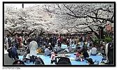 080327 上野恩賜公園 櫻花直擊:CIMG6038.jpg
