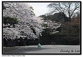 080329 東京櫻花盛開了:DSC_1593.jpg