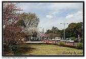080329 東京櫻花盛開了:DSC_1594.jpg