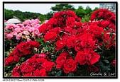 080607 京成玫瑰園:DSC_2803.jpg