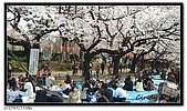 080327 上野恩賜公園 櫻花直擊:CIMG6044.jpg