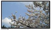 080327 上野恩賜公園 櫻花直擊:CIMG6049.jpg