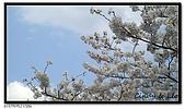 080327 上野恩賜公園 櫻花直擊:CIMG6050.jpg