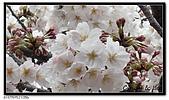 080327 上野恩賜公園 櫻花直擊:CIMG6056.jpg
