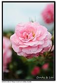 080607 京成玫瑰園:DSC_2836.jpg