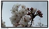 080327 上野恩賜公園 櫻花直擊:CIMG6060.jpg