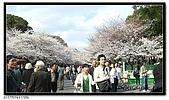 080327 上野恩賜公園 櫻花直擊:CIMG6173.jpg