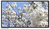 080327 上野恩賜公園 櫻花直擊:CIMG6185.jpg