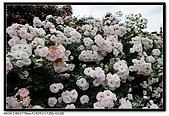 080607 京成玫瑰園:DSC_2841.jpg