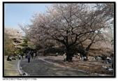 080405 新宿御苑 櫻花樹下野餐:DSC_2076.jpg