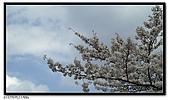 080327 上野恩賜公園 櫻花直擊:CIMG6064.jpg