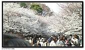 080327 上野恩賜公園 櫻花直擊:CIMG6188.jpg