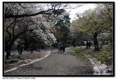 080405 新宿御苑 櫻花樹下野餐:DSC_2082.jpg