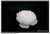 080607 京成玫瑰園:DSC_2846.jpg
