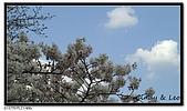 080327 上野恩賜公園 櫻花直擊:CIMG6066.jpg