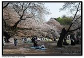 080405 新宿御苑 櫻花樹下野餐:DSC_2083.jpg