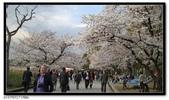 080327 上野恩賜公園 櫻花直擊:CIMG6345.jpg