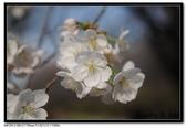 080405 新宿御苑 櫻花樹下野餐:DSC_2086.jpg