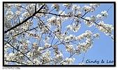 080327 上野恩賜公園 櫻花直擊:CIMG6198.jpg
