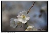 080405 新宿御苑 櫻花樹下野餐:DSC_2095.jpg