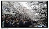 080327 上野恩賜公園 櫻花直擊:CIMG6068.jpg