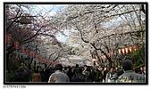 080327 上野恩賜公園 櫻花直擊:CIMG6206.jpg