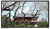 080327 上野恩賜公園 櫻花直擊:CIMG6209.jpg