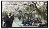 080327 上野恩賜公園 櫻花直擊:CIMG6347.jpg