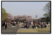 080405 新宿御苑 櫻花樹下野餐:DSC_2101.jpg