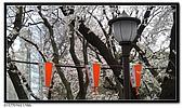 080327 上野恩賜公園 櫻花直擊:CIMG6076.jpg