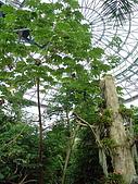 苗栗、台中行-科博館熱帶溫室:DSC03903