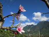 緋紅 櫻花:IMG_1728.JPG