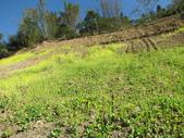 茶山產業道路紀行:IMG_1799.JPG