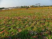 2007-12-1(新社花海節):DSCF5008.JPG