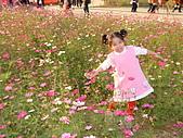 2007-12-1(新社花海節):DSCF5023.JPG