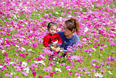 小葵跟虎姑公在家門口的花海:DSC_7550.JPG