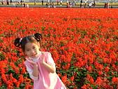 2007-12-1(新社花海節):DSCF5029.JPG