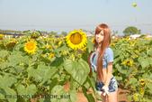 新社花海2012~Q咩咩:DSC_2766拷貝.jpg