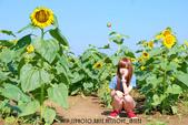 新社花海2012~Q咩咩:DSC_2782拷貝.jpg