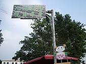 200711 銅鑼杭菊花:IMGP3961.JPG