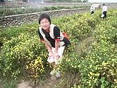 200711 銅鑼杭菊花:IMGP3981.JPG