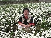 200711 銅鑼杭菊花:IMGP3987.JPG