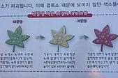 200901韓國大邱:IMG_1694.JPG