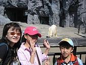 日本北海道自由行:025旭川動物園北極熊.jpg