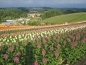 日本北海道自由行:208四季彩之丘.JPG